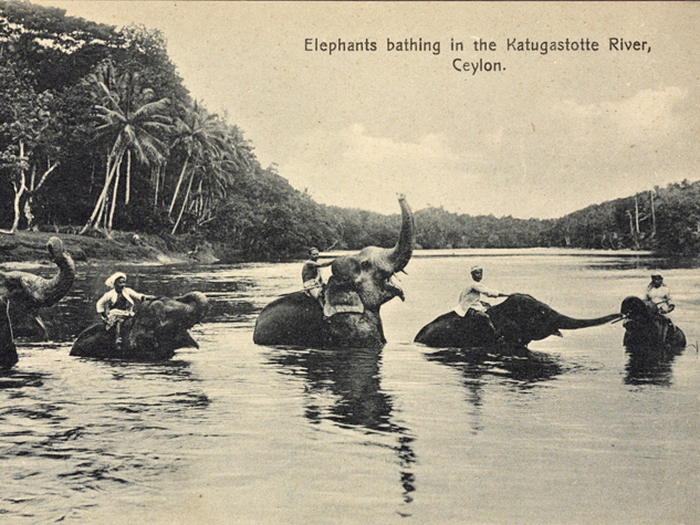 Sri-Lanka-Elephants-Bathing-Katugastota-River,-Ceylon-2